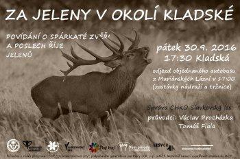 Za jeleny v okolí Kladské