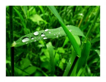 LUBOMÍR ŠTIKA: Jak přírodu vidím já