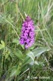 Za orchidejemi do parku v Mariánských Lázních 2019